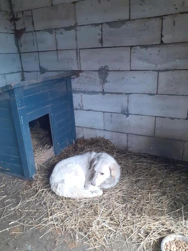 BALANUCH, mâle croisé berger sauvé de Pallady, né en 2009 parrainé par Nathalie G. -Gage Coeur  Myri_Bonnie-SC-R-SOS- - Page 3 13723811