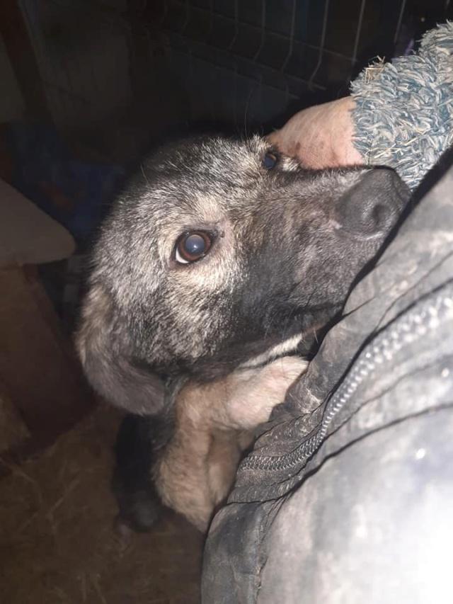 RALFY - né en 2019 - taille moyenne, trouvé enfermé dans un sac-R-SOS-SC 13727710