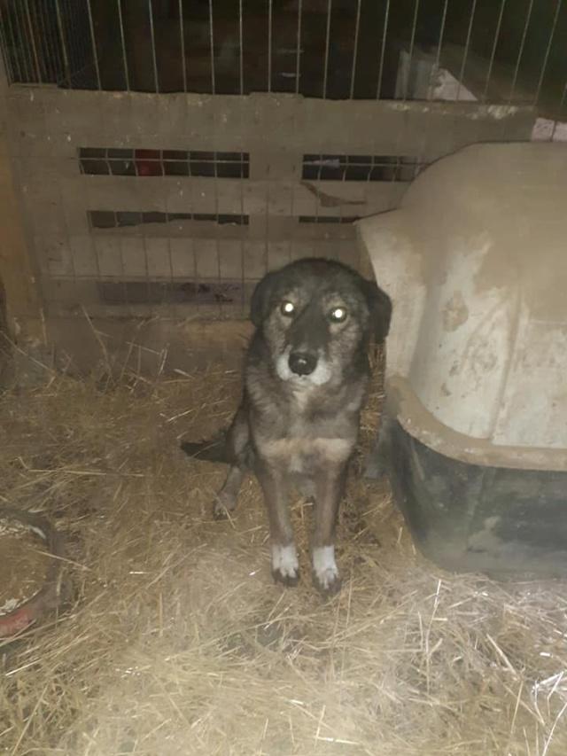 RODA, femelle de taille moyenne née en 2012, trouvée dans la rue - Parrainée par Manganouchka --R-SOS-SC 13750410
