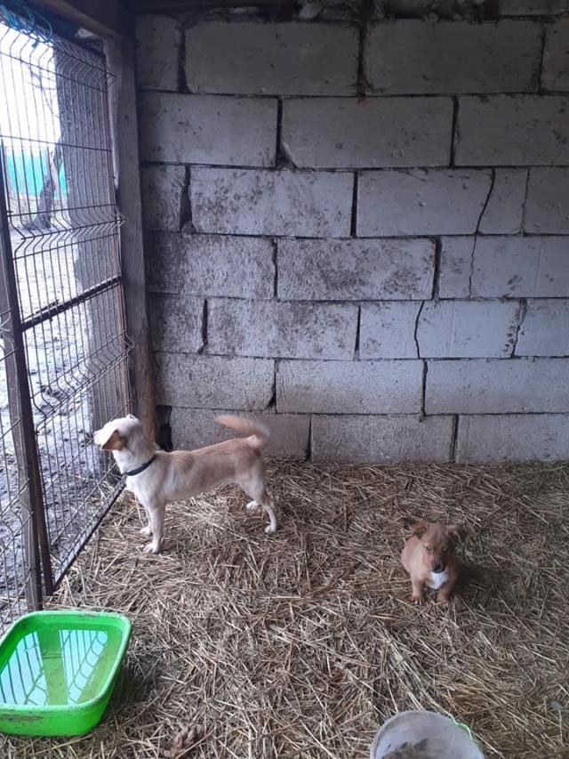 wapi - WAPI petite femelle née en 2018 et son chiot - sauvés de Pallady  le 18/11/2020- parrainée par Elda -R-SOS-SC 13752710