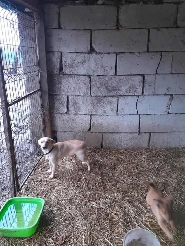 wapi - WAPI petite femelle née en 2018 et son chiot - sauvés de Pallady  le 18/11/2020- parrainée par Elda -R-SOS-SC 13760010