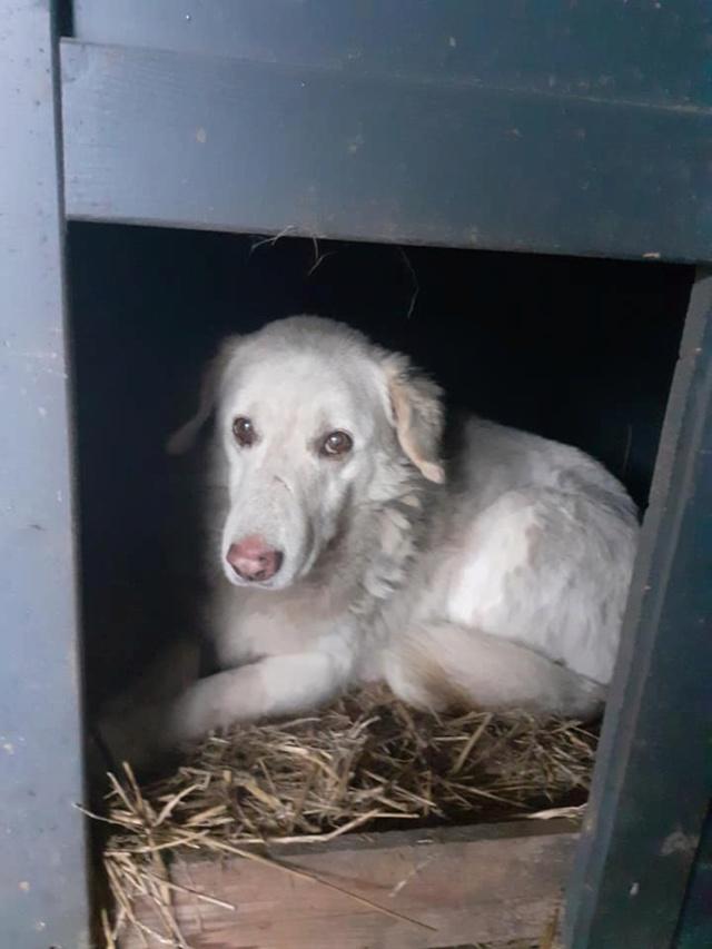 BALANUCH, mâle croisé berger sauvé de Pallady, né en 2009 parrainé par Nathalie G. -Gage Coeur  Myri_Bonnie-SC-R-SOS- - Page 3 13761011