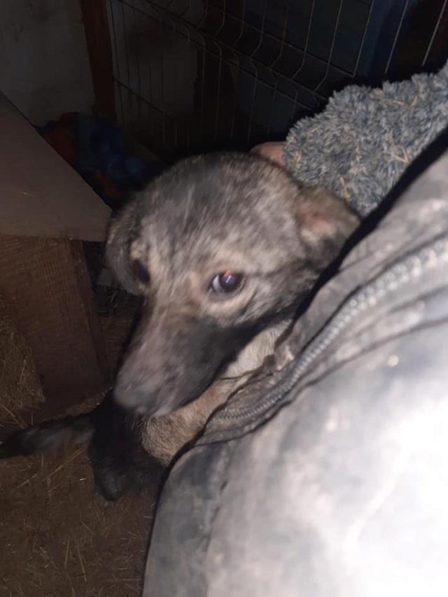 RALFY - né en 2019 - taille moyenne, trouvé enfermé dans un sac-R-SOS-SC 13764910