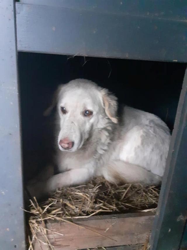 BALANUCH, mâle croisé berger sauvé de Pallady, né en 2009 parrainé par Nathalie G. -Gage Coeur  Myri_Bonnie-SC-R-SOS- - Page 3 13805512