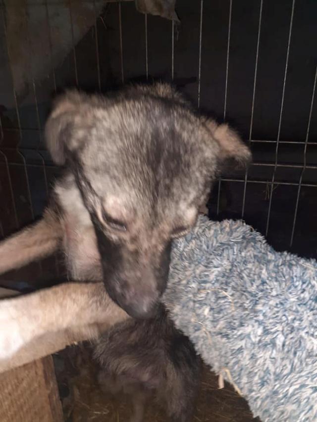 RALFY - né en 2019 - taille moyenne, trouvé enfermé dans un sac-R-SOS-SC 13818311