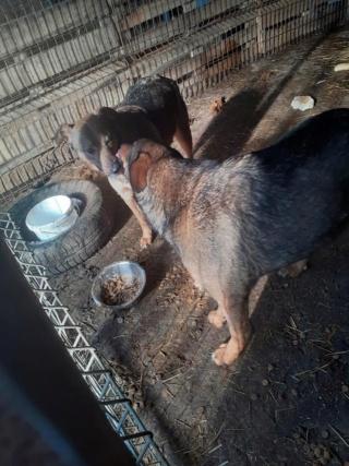 OUZO, né en sept 2017,  croisé berger, frère de Taliya et Nami, trouvé dans la rue en mai 2018 - Parrainé par Viviane -R- - Page 2 13964811