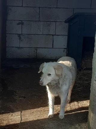 BALANUCH, mâle croisé berger sauvé de Pallady, né en 2009 parrainé par Nathalie G. -Gage Coeur  Myri_Bonnie-SC-R-SOS- - Page 3 14028110