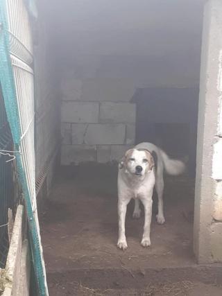 NEISSON, mâle taille moyenne, né en 2010 , trouvé près de Bucarest - parrainé par Sylvie H-R-SC-SOS 14172710