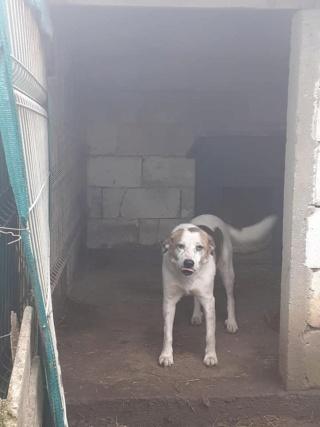 NEISSON, mâle taille moyenne, né en 2010 , trouvé près de Bucarest - parrainé par Sylvie H-R-SC-SOS 14295610