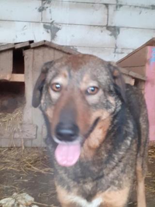 OUZO, né en sept 2017,  croisé berger, frère de Taliya et Nami, trouvé dans la rue en mai 2018 - Parrainé par Viviane -R- - Page 2 14450110
