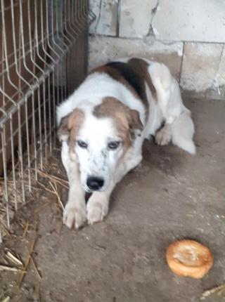 NEISSON, mâle taille moyenne, né en 2010 , trouvé près de Bucarest - parrainé par Sylvie H-R-SC-SOS 14771310