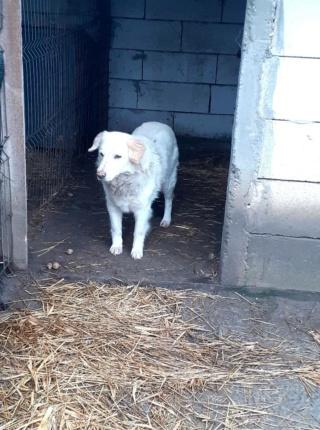 BALANUCH, mâle croisé berger sauvé de Pallady, né en 2009 parrainé par Nathalie G. -Gage Coeur  Myri_Bonnie-SC-R-SOS- - Page 3 14779911