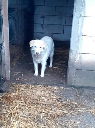 BALANUCH, mâle croisé berger sauvé de Pallady, né en 2009 parrainé par Nathalie G. -Gage Coeur  Myri_Bonnie-SC-R-SOS- - Page 3 14785610