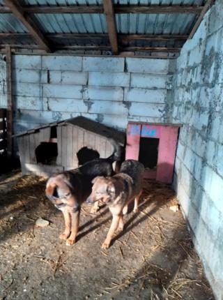OUZO, né en sept 2017,  croisé berger, frère de Taliya et Nami, trouvé dans la rue en mai 2018 - Parrainé par Viviane -R- - Page 2 15037110