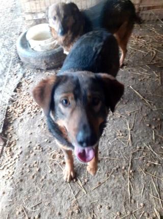 OUZO, né en sept 2017,  croisé berger, frère de Taliya et Nami, trouvé dans la rue en mai 2018 - Parrainé par Viviane -R- - Page 2 15274111