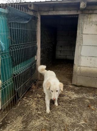 BALANUCH, mâle croisé berger sauvé de Pallady, né en 2009 parrainé par Nathalie G. -Gage Coeur  Myri_Bonnie-SC-R-SOS- - Page 3 15290310