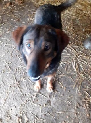 OUZO, né en sept 2017,  croisé berger, frère de Taliya et Nami, trouvé dans la rue en mai 2018 - Parrainé par Viviane -R- - Page 2 15314210