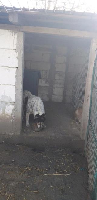 FÉFINO, né  en 2013 - Sorti de Mihailesti le 25 février - parrainé par Mimaoinikebou2021-R-SC-SOS 15546610