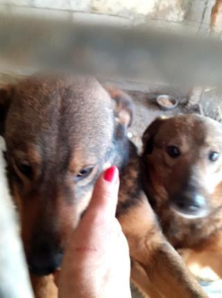 OUZO, né en sept 2017,  croisé berger, frère de Taliya et Nami, trouvé dans la rue en mai 2018 - Parrainé par Viviane -R- - Page 2 15831717