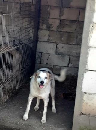 NEISSON, mâle taille moyenne, né en 2010 , trouvé près de Bucarest - parrainé par Sylvie H-R-SC-SOS 15841710