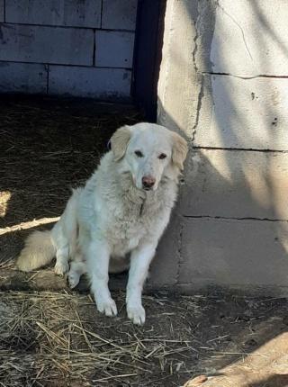 BALANUCH, mâle croisé berger sauvé de Pallady, né en 2009 parrainé par Nathalie G. -Gage Coeur  Myri_Bonnie-SC-R-SOS- - Page 3 15855411