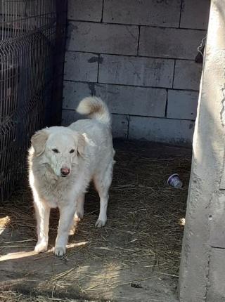 BALANUCH, mâle croisé berger sauvé de Pallady, né en 2009 parrainé par Nathalie G. -Gage Coeur  Myri_Bonnie-SC-R-SOS- - Page 3 15859310