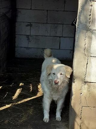 BALANUCH, mâle croisé berger sauvé de Pallady, né en 2009 parrainé par Nathalie G. -Gage Coeur  Myri_Bonnie-SC-R-SOS- - Page 3 16083610
