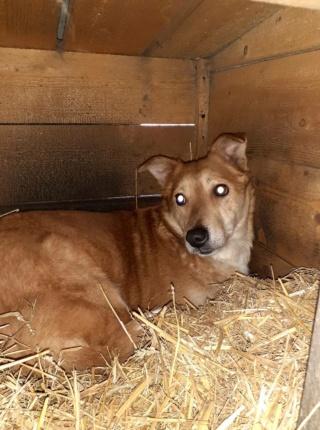 INAYA, femelle berger née en 2014 sauvée de l'equarrissage pour Noel - marrainé par Réglisse -  16092410