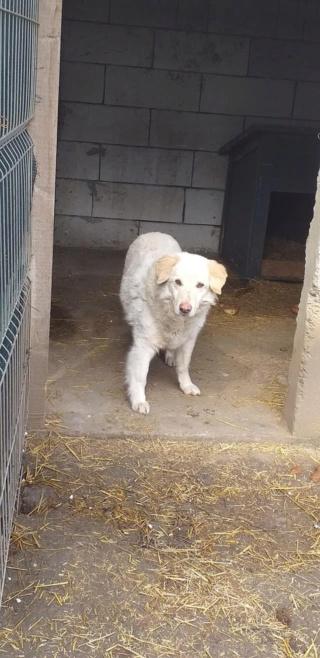 BALANUCH, mâle croisé berger sauvé de Pallady, né en 2009 parrainé par Nathalie G. -Gage Coeur  Myri_Bonnie-SC-R-SOS- - Page 3 16836611