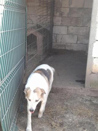 NEISSON, mâle taille moyenne, né en 2010 , trouvé près de Bucarest - parrainé par Sylvie H-R-SC-SOS 17181410