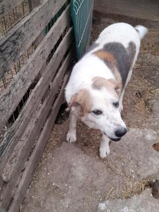 NEISSON, mâle taille moyenne, né en 2010 , trouvé près de Bucarest - parrainé par Sylvie H-R-SC-SOS 17513310