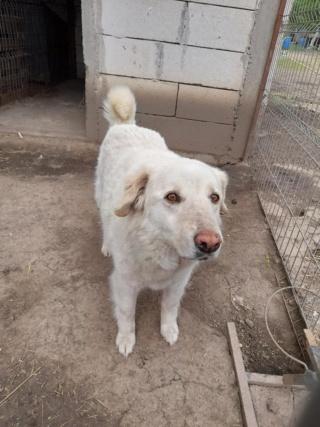 BALANUCH, mâle croisé berger sauvé de Pallady, né en 2009 parrainé par Nathalie G. -Gage Coeur  Myri_Bonnie-SC-R-SOS- - Page 3 18652611