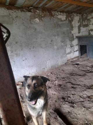aden - ADEN, né en 2015 ,  trouvé attaché à la grille du refuge-parrainé par Marine M. - R-SC-SOS 19228810