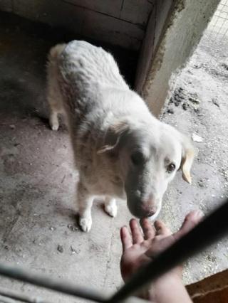 BALANUCH, mâle croisé berger sauvé de Pallady, né en 2009 parrainé par Nathalie G. -Gage Coeur  Myri_Bonnie-SC-R-SOS- - Page 3 19399610