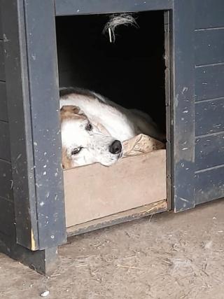 NEISSON, mâle taille moyenne, né en 2010 , trouvé près de Bucarest - parrainé par Sylvie H-R-SC-SOS - Page 2 19767710