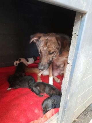 TSARINE, femelle, née en 2020, trouvée blessée au cou le 13/05/2021 - Parrainée par les3loulous-R-SC 20749510