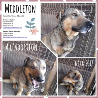 MIDDLETON né en 2017, sorti de l'équarrissage - Parrainé par Chantal01 -R-SC- 22117610