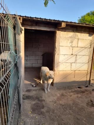 BALANUCH, mâle croisé berger sauvé de Pallady, né en 2009 parrainé par Nathalie G. -Gage Coeur  Myri_Bonnie-SC-R-SOS- - Page 3 22458610