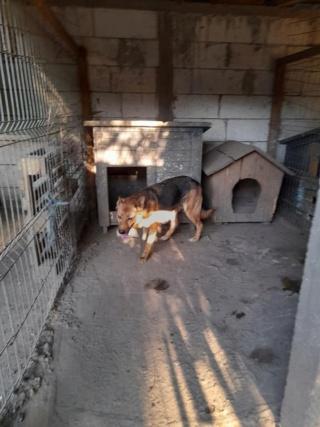 NEBBIA, type berger, née en 2013, récupérée chez un particulier avec sa fille LISSY - parrainée par Mirko78-R-SC 22467410