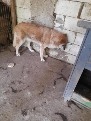 IPSY, née en 2008 sauvée de Mihailesti le 16 Avril 2018 - marrainée par Hashleyalex-R-SC-SOS 22866310