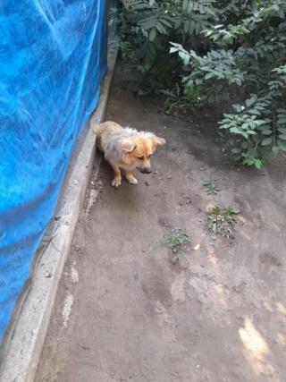 LALI, née en 2019, maman et ses 4 chiots trouvés près du refuge- parrainée par Claire93 -R- SC 22965910
