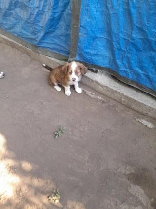 LALI, née en 2019, maman et ses 4 chiots trouvés près du refuge- parrainée par Claire93 -R- SC 23070510