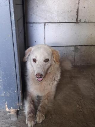 BALANUCH, mâle croisé berger sauvé de Pallady, né en 2009 parrainé par Nathalie G. -Gage Coeur  Myri_Bonnie-SC-R-SOS- - Page 3 23925110