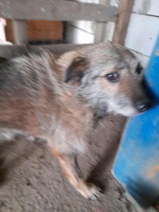 JUMPY femelle née en 2010- sauvé de l'équarrissage le 10/04/2014- parrainée par Edni94 -R-SC-SOS - Page 4 24101010