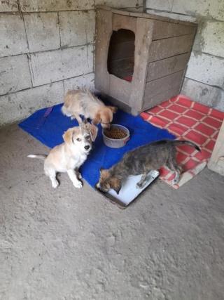 YUKI, née en  06/2021, trouvée avec sa mère LALI et ses 3 soeurs-R-SC 24172914