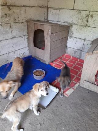 YUKI, née en  06/2021, trouvée avec sa mère LALI et ses 3 soeurs-R-SC 24185312