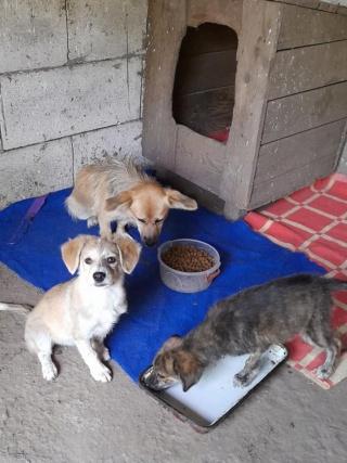 YUKI, née en  06/2021, trouvée avec sa mère LALI et ses 3 soeurs-R-SC 24196711