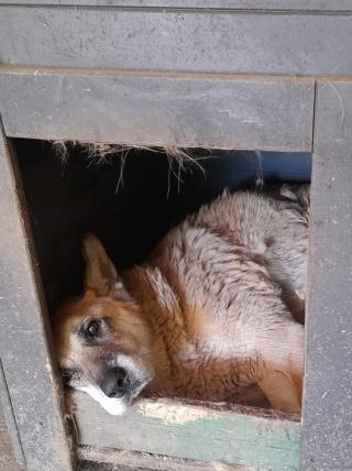 IPSY, née en 2008 sauvée de Mihailesti le 16 Avril 2018 - marrainée par Hashleyalex-R-SC-SOS - Page 2 24446610