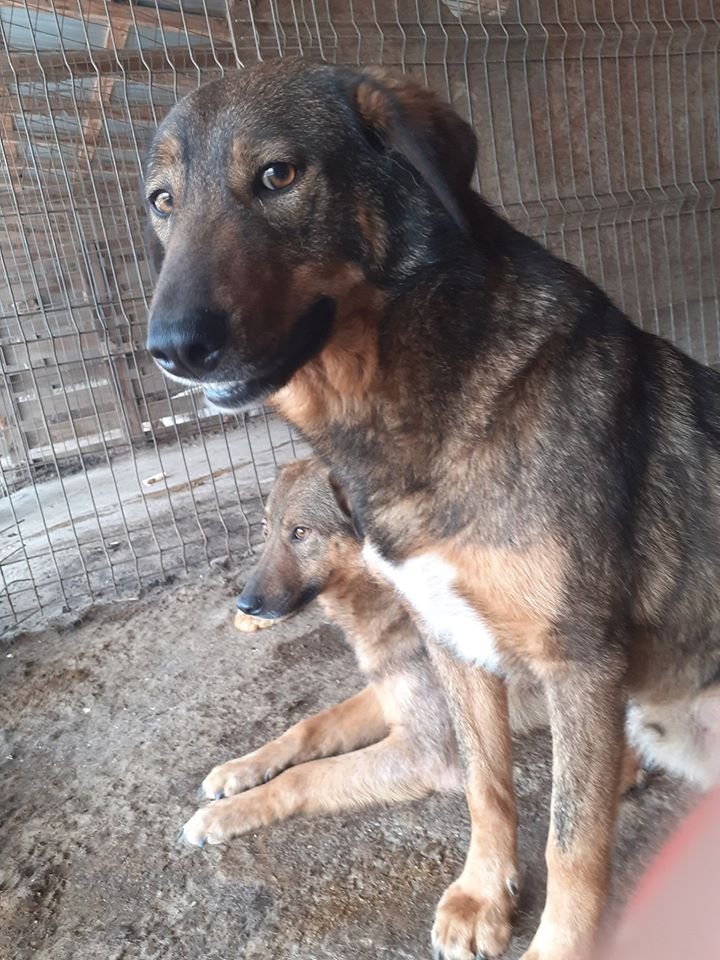NAMI, croisé berger, soeur de Taliya et Ouzo, trouvée dans la rue en mai 2018- marrainée par Guyenne -R- - Page 2 95586610