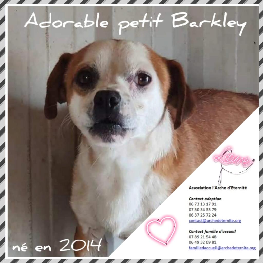 barkley - BARKLEY (petit gabarit) né en 2014, sorti de l'équarrissage le 20/08/2020 -(Dept45)-SC-R-SOS Barkle12